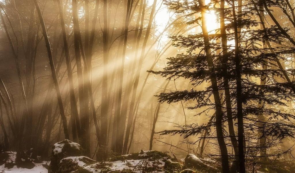 Лучи сквозь ветви деревьев